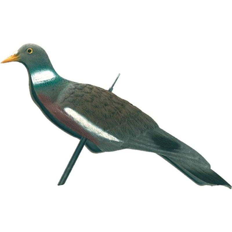Appelant Europ Arm Pigeon Anglais